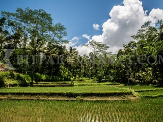 Agricultural jungle - Indonesia