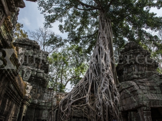 Inside the Angkor Wat - Cambodia